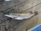 Рыбаки и их уловы